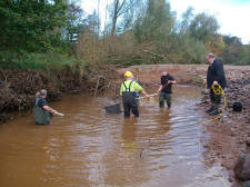 Tweed bailiffs rescuing fish on the Beamish